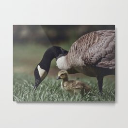 Baby Goose Metal Print