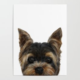 Yorkshire Terrier Mix colorDog illustration original painting print Poster