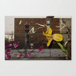 Urban Flowers 4 Canvas Print