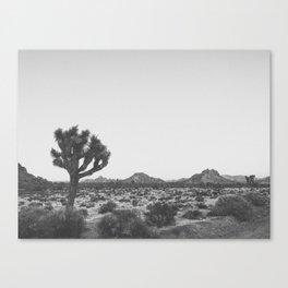 JOSHUA TREE V / California Canvas Print