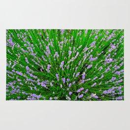Lavender Close Up Rug