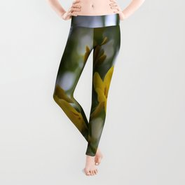 Shaded Carolina Jessamine Leggings