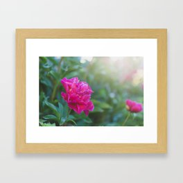 Peony Garden - Floral Photography Framed Art Print