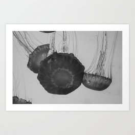 Jellyfish Basics no. 3 Art Print