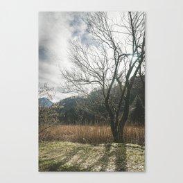 The big leafless tree Canvas Print