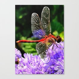 Red Dragonfly on Violet Purple Flowers Canvas Print