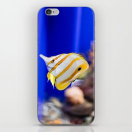 Butterfly fish iPhone Skin