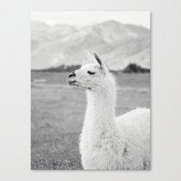 Mountain Llama Canvas Print