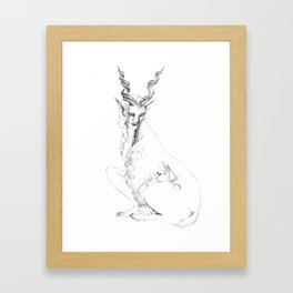 Capra falconeri Framed Art Print