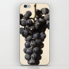 Vintage Concord Grapes Illustration iPhone Skin