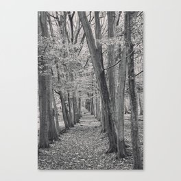 Black and white line of trees. Canvas Print