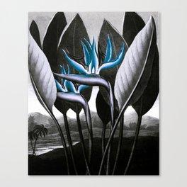 Birds of Paradise Temple of Flora Blue Gray Canvas Print