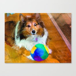 Sheltie with Ball Canvas Print