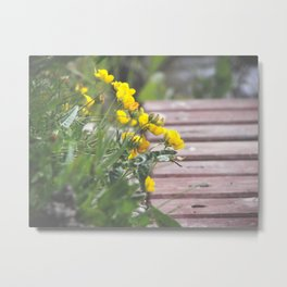 Little Yellows Metal Print