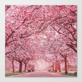 Cherry Blossom in Greenwich Park Canvas Print