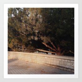 Shadow Tree 3 Art Print