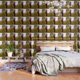 Castel Photography Wallpaper