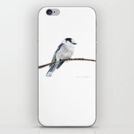 Gray Jay by Teresa Thompson iPhone Skin