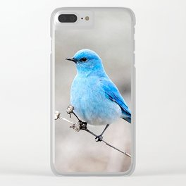 Mountain Bluebird on the Tansy Clear iPhone Case