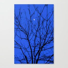 Magic in the Moonlight Canvas Print