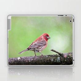 Fancy Finch Laptop & iPad Skin