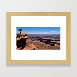 Tree Overlooking the Canyonlands Framed Art Print