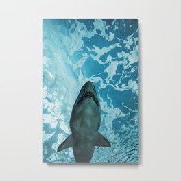 Shark Photography   Deep Sea   Ocean Art   Wildlife   Nature   Fish Metal Print