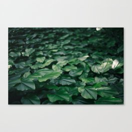 Vibrant leaves on the island of Sentosa, Singapore Canvas Print