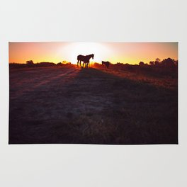 Silhouettes of horses at sunset in the field. Long shadows in the golden hour. Rug