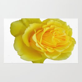 Beautiful Yellow Rose Closeup Isolated on White Rug