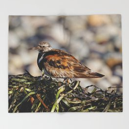 Ruddy Turnstone on Seaweed Mountain at the Beach Throw Blanket