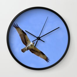Common Osprey with Fish Wall Clock