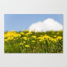 Yellow view  Canvas Print