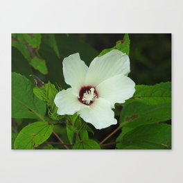 Tennessee Hibiscus Canvas Print