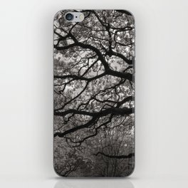 Magnolia Trees in Blossom 01 iPhone Skin