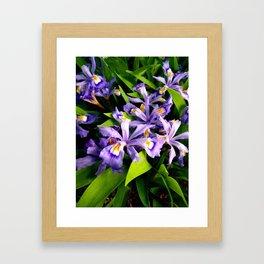 Baby Iris Bliss Framed Art Print