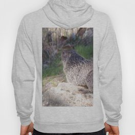 North American Beaver in the Wild, Nature, Animal, Beaver Hoody