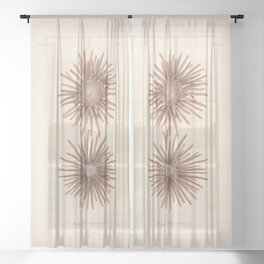 Naturalist Sea Urchins Sheer Curtain