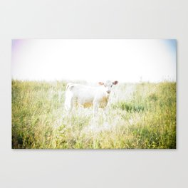 Not a lamb Canvas Print