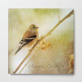 American Gold Finch Metal Print