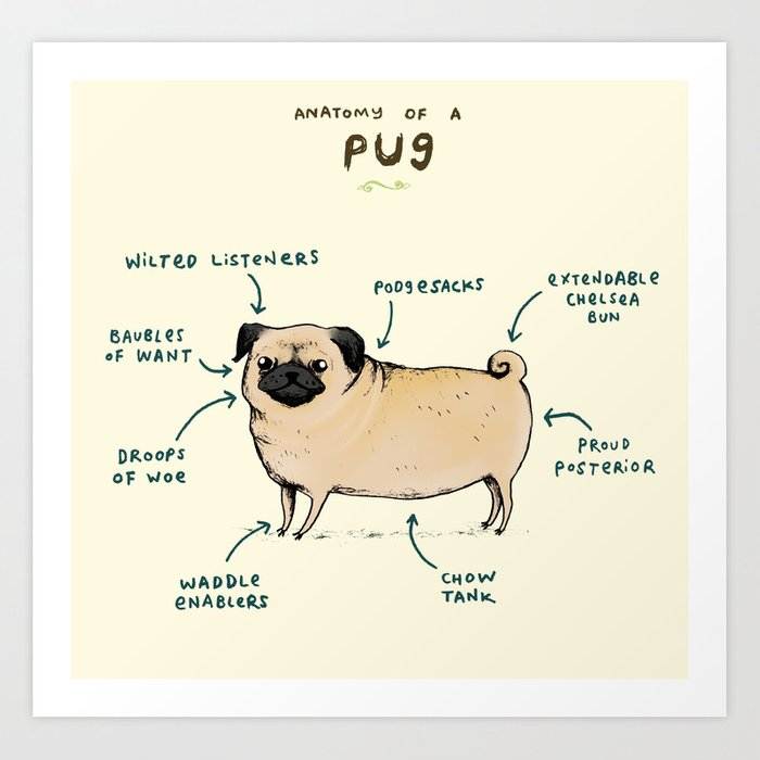 Anatomy of a Pug Art Print by sophiecorrigan | Society6
