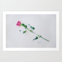 Pink rose immersed in purple colored milk Art Print
