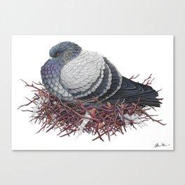 Rock Pigeon Canvas Print