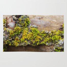 Moss on a Fallen Tree Rug