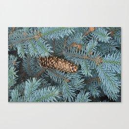 Fallen Pinecone Canvas Print