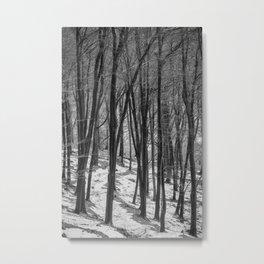 Through the Snowy Beech Wood Metal Print
