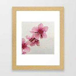 Spring Blossom 2 Framed Art Print