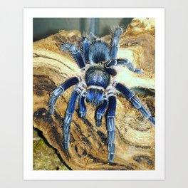 Nugget the Blue Tarantula Art Print