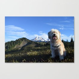 Adventurers come in all Shapes & Sizes, Ft. Lily, Pt. 2 - Skyline Divide Trail, Washington State Canvas Print