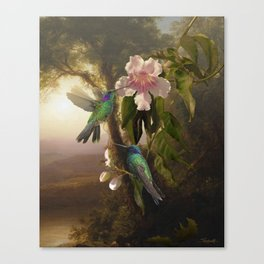 Sparkling Violetear Hummingbirds Canvas Print